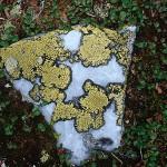 Kartlav - Rhizocárpon geográphicum